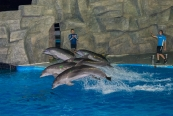 Yunus Balıkları Gösteri Merkezi, Batum